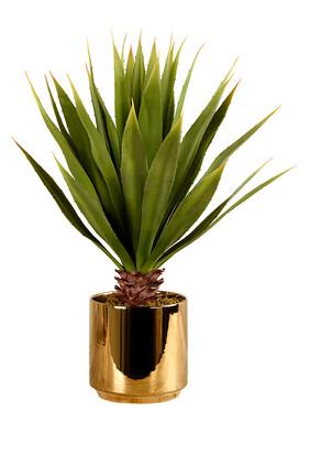 نبتة أغاف كبيرة في وعاء