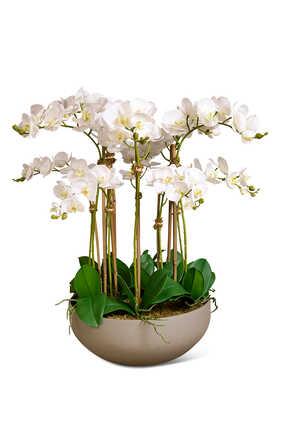 باقة زهور الأوركيد