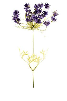 زهور تراخيليوم صناعية