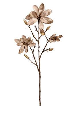 زهور ماغنوليا مفتحة