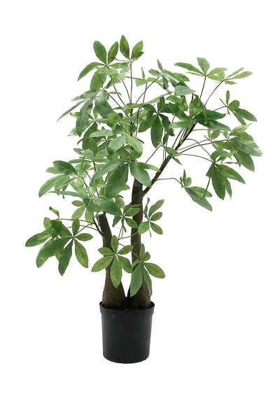 نبات شفلرية صناعية